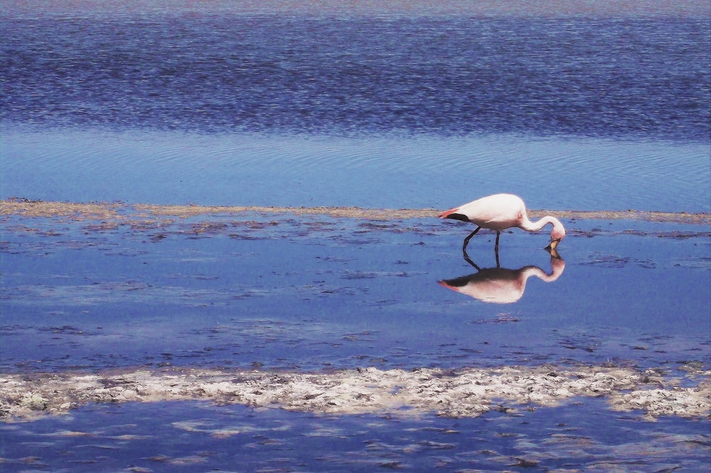 Flamingos flourish in this environment, despite temperatures often dropping to sub-zero